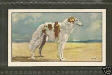 1936 UK Dog Art Body Gallaher A Cigarette Trade Card BORZOI / RUSSIAN WOLFHOUND