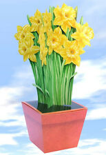 Daffodil Terracotta Gift Box-wrapping paper