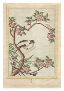 Original Antique c.1776 PIERRE JOSEPH BUCHOZ Engraving - Pl. 18 FLOWERS OF CHINA