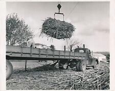 ST CROIX c. 1950 - Sugar Cane Truck Virgin Islands - GF 295