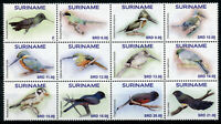 Suriname Birds on Stamps 2020 MNH Hummingbirds Kingfishers Motmot 12v Block