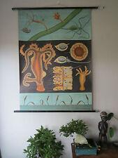 Vintage Jung Koch quentell desplegable zoológico Tiza Tabla de agua dulce Hydra