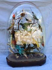 Antique 19th Century Large Victorian 17 Taxidermy Birds Diorama Glass Dome