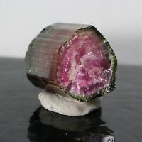 16.05ct Watermelon Tourmaline Crystal Cruziero Mine Mineral Minas Gerais Brazil