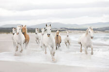 GALLOPING WILD WHITE HORSES COAST SHORE Photo Wallpaper Wall Mural 368x254cm