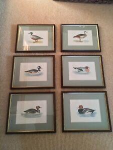6 framed Rev FO Morris antique hand coloured bird prints
