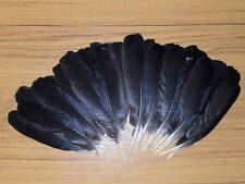 30 Crow Wing plumes, fly tying, Art & Craft, Tribal arts, bijoux. dreamcatcher