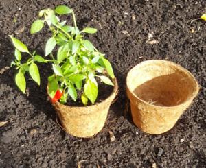 Biodegradable Midi Coir Pots 10cm x 8 cm depth plant seed seedling pots x 20