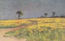 APPLEDORE :   Buttercups at Appledore-KIRKPATRICK-C.W.FAULKNER