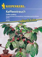 Rapanelli - arbusto caffè Coffea arabica 4740 semi di caffè Pianta del caffè