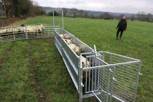 BATEMAN SHEEP RACE Complete with Drafting Gate Drafter Panels Handling UK Made