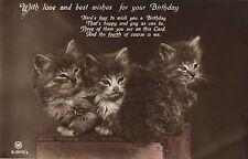 3 tabby cats kittens in a row birthday photo postcard