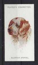 1929 Uk Arthur Wardle Art Dog Portrait Player Cigarette Card Clumber Spaniel