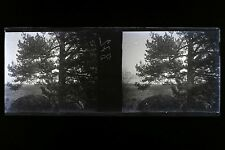 Plaque stéréo Negatif Vintage stereoview Negatif N30