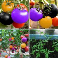 Km _ Eb_ Bg _ JT _100Pcs Tomaten Samen Bio Frucht Gemüse Pflanze Samen Heim