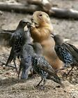 Squirrel & Birds 8 x 10 / 8x10 GLOSSY Photo Picture IMAGE #20