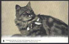 Pussy Cats. 2 x Raphael Tuck & 1 Valentine's Vintage Cat Themed Postcards