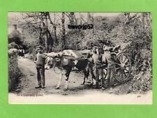 Bullock Cart Guernsey Lane Rural unused pc J Welch & Sons Ref A878