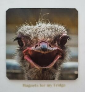 FUNNY LAUGHING OSTRICH FRIDGE MAGNET - M825 F