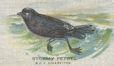Vintage tobacco cigarette silk - Bird: Stormy Petrel, Bdv Cigarettes