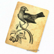 Grosbeak Deco Magnet, Decorative Fridge Refrigerator Kitchen Décor Bird Animal
