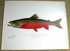 Denton FISH Print CANADIAN RED TROUT Adult Male 12 inches by 9 3/8 Vintage