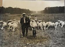 PHOTO PRESSE TRAMPUS VICHY + 1942 + BERGER et son CHIEN + MOUTONS après la tonte