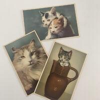 Vintage Alfred Mainzer Lithograph Cat Postcard Lot 3 Belgium Kittens Persian