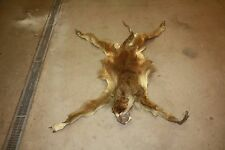 African Complete Tanned For Taxidermy Baboon Hide Skin Fur Rug Hyena Mount B3