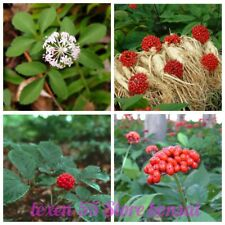 200Pcs Ginseng Herb Seeds Root of Life Gift of Immortality Divine Grass 4 Kinds