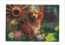 dog in garden view 3D Lenticular Holographic Stereoscopic Picture Wall Art