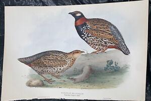 Original John Gould Birds of Europe European Francolin