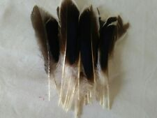 """10 pcs Duck Feathers Millinery & Crafts 3-6"""" Natural"""