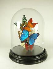 Glass dome with mixed beautiful butterflies