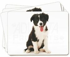 Border Collie Puppy Picture Placemats in Gift Box, AD-CO45P