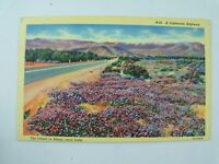 Vintage 1930's Highway near Indio, Desert in Bloom, California CA Linen Postcard