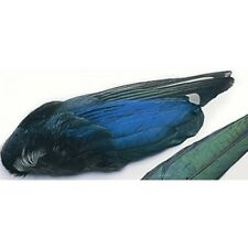 Magpie Wings, Fly Tying Feathers, For Making Trout Flies, Hackles for Flies