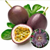20pcs Passiflora Caerulea Passionsfrucht Saatgut Organische Passiflora Samen
