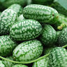 Mexican Mini Sour Gherkins aka Cucamelon - USA Grown (15 seeds)