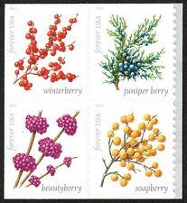 USA Sc. 5418a (55c) Winter Berries 2019 MNH bklt. block of 4