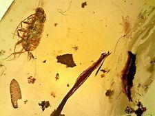 Burmese Myanmar Fossil Cretaceous Amber/Burmite Cockroach, Botanical T40 0.77g