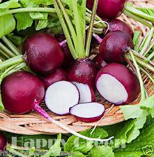 RAVANELLO-violetto-viola prugna-ca. 750 Semi 7,4 grammi/0,26oz. - vegetale