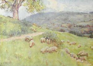 ANTIQUE WATERCOLOUR PRINT COTSWOLDS A COTSWOLDS SHEEP PASTURE 1920