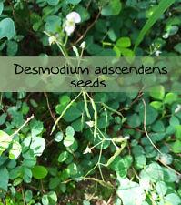 100 graines de Desmodium adscendens plant seeds  Desmodium