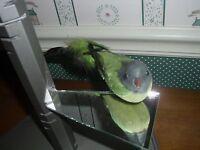 K&K INTERIORS  GREEN CLIP ON BIRD  ORNAMENT-NEW