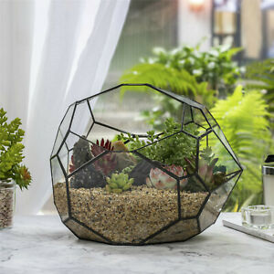 NCYP Irregular Open Geometric Glass Terrarium Bubble Shape for Succulents