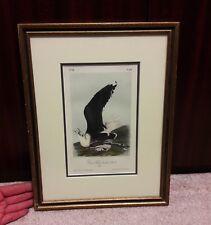 J.J. Audubon octavo J.T. Bowen colored lith Great Black backed gull No 90 Pl 450