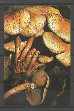 Champignons Guyane (30) bloc oblitéré