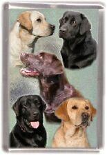Labrador Fridge Magnet Design No 12 by Starprint