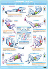 Abdominal Exercise Poster Core Muscles Fitness Chart